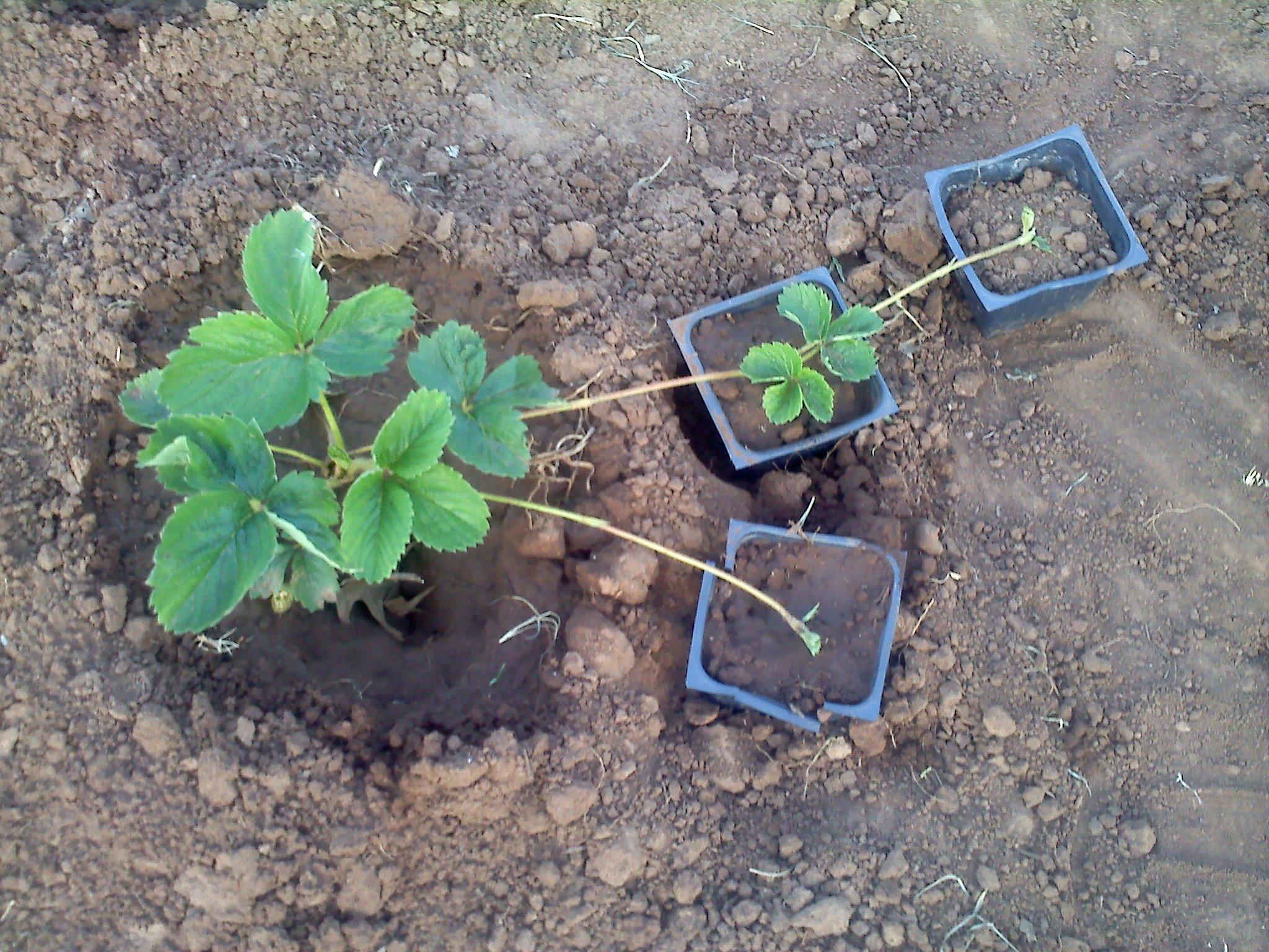 Plant Propigation
