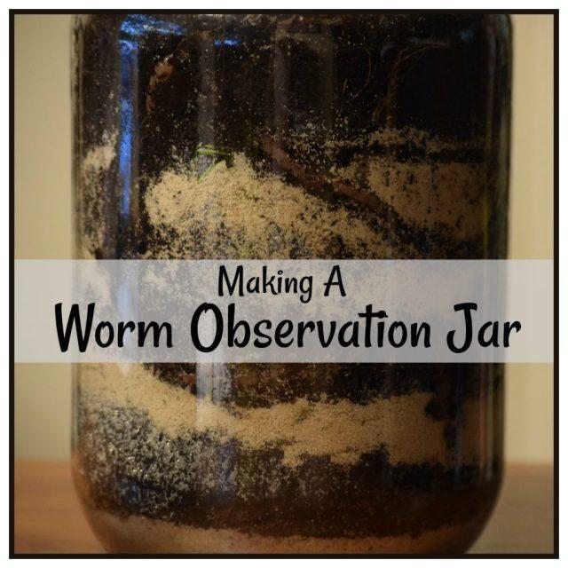 worm observation jar2