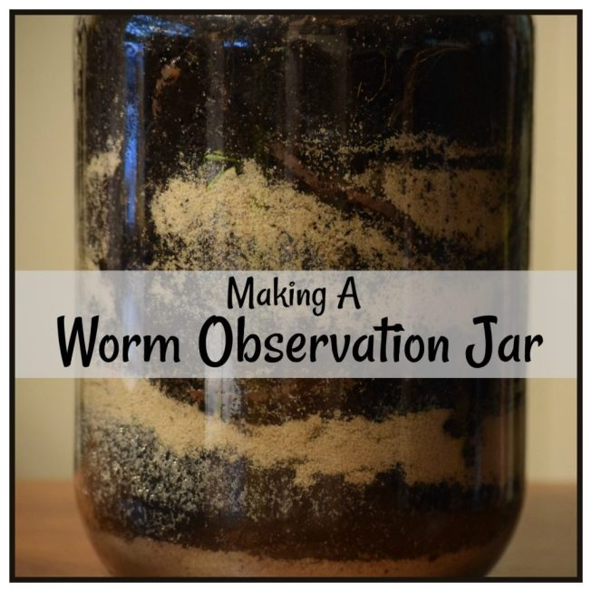 worm observation jar2