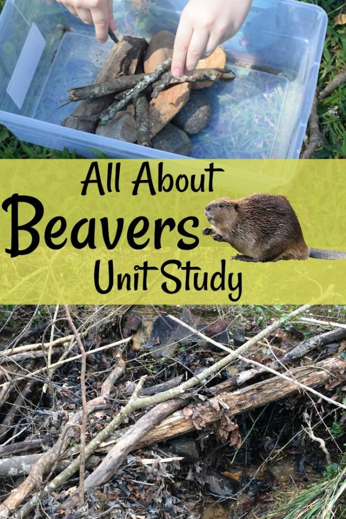 Beavers Unit Study