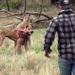 Man Punches a Kangaroo in the Face to Rescue his Dog