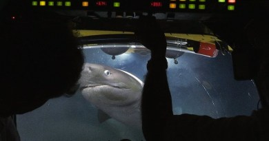 The Moment Giant Sharks Attack Crew Submarine