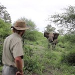 Tour Guide Keeps Cool As Elephant Charges At Him Twice