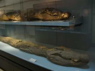 Crocodiles_mummies,_Cairo_Egyptian_Museum_02