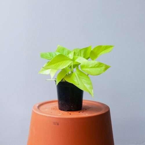 Natty Garden Plant black Owned gift guide