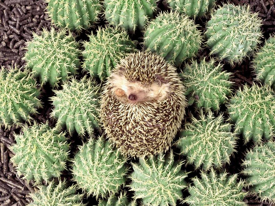 these 27 camouflaged animals