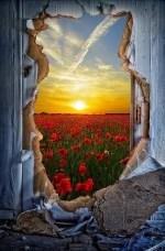 door-1781720_960_7201