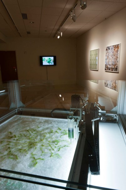Installation view of Allison Kudla section in Intimate Science exhibition at Miller Gallery at Carnegie Mellon University