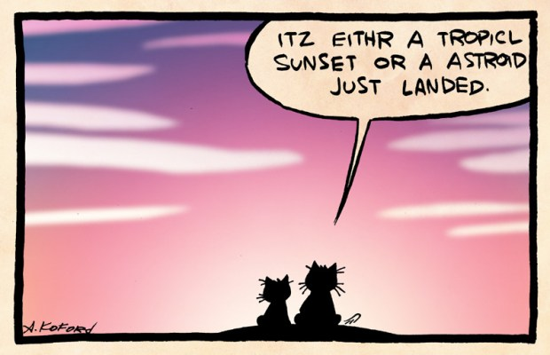Two lolcats watch the sunset.