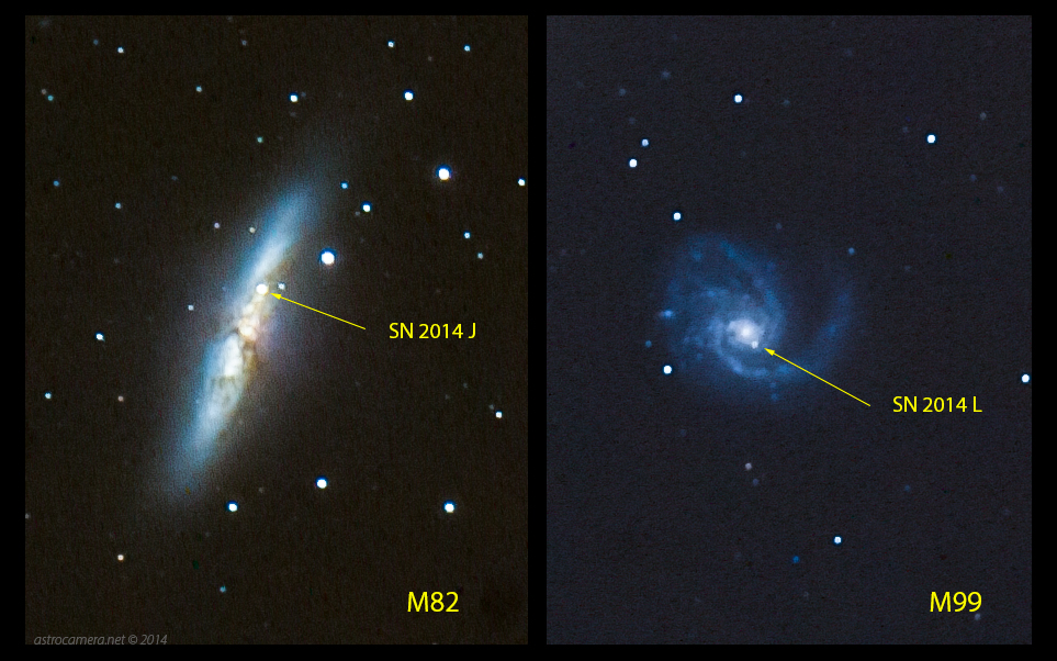 Supernovae in M82 and M99