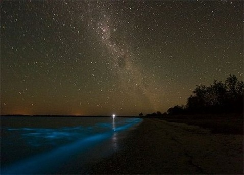Amazing_Bioluminescent_Lake_in_Australia_25283_2529