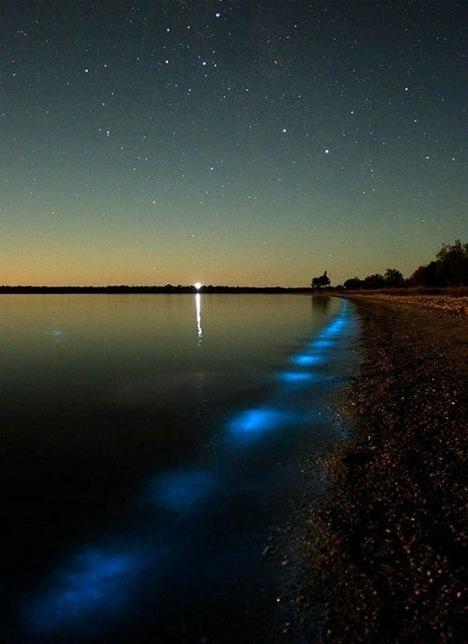 Amazing Bioluminescent Lake in Australia (1)