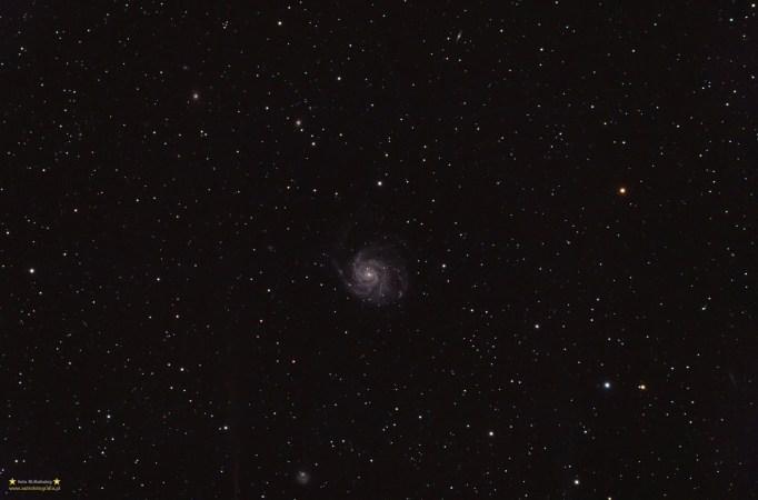 M101 - wide. Teleskop Celestron ED80 + field flattener TeleVue 0,8x - ISO400 11x420 sekund, zmodyfikowany 300D, montaż Takahashi EM200. Galaktyka M101 w nieco szerszym polu. Widać jak dużo galaktyk otacza ten piekny obiekt i jednocześnie słaby obiekt.