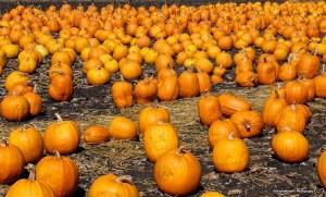 Pumpkin Capitol of the World