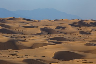 North Algodones Dunes