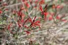 3-10-WildflowerJsign