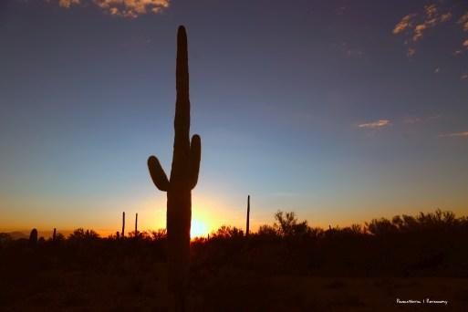 Goodnight Tucson