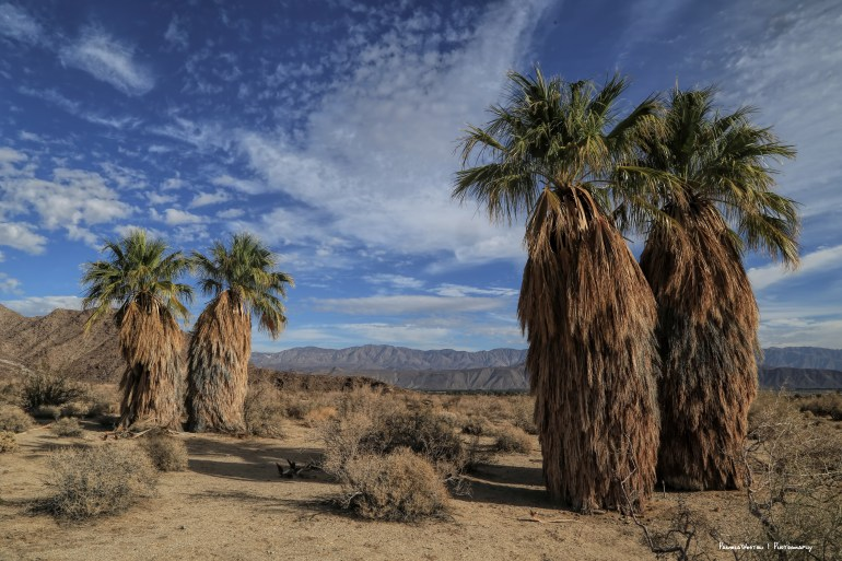 Endemic Palm trees