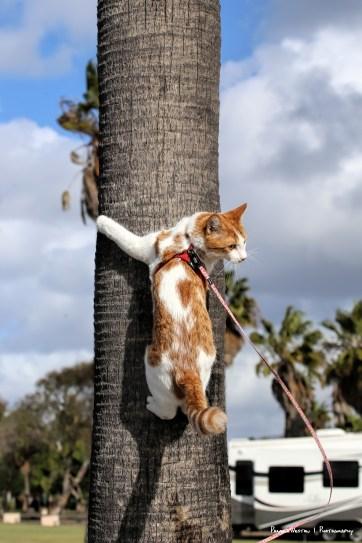 Yahoo! Palm trees to climb, no spines!