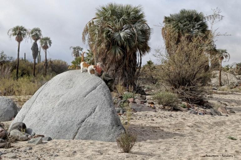 Groot boulder climbing:)