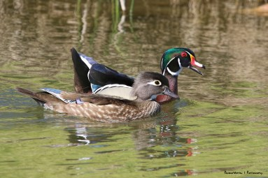 """""""Like I was saying, don't be talking to the other guy ducks!"""""""