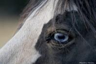5-7-eyes of animals