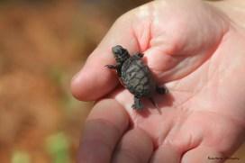 OMG...so tiny!