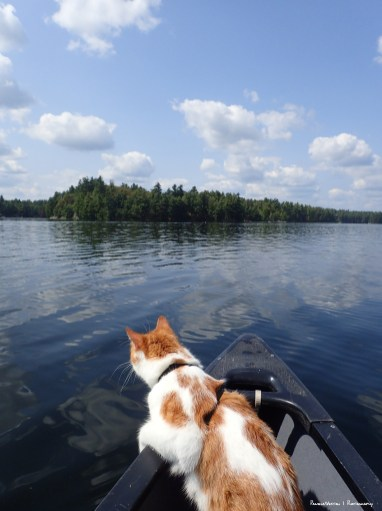 Checking out the view from the front of the canoe:)