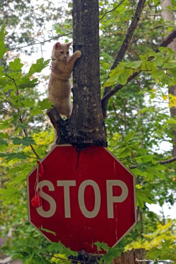 No stopping this little monkey