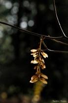 Backlit seeds