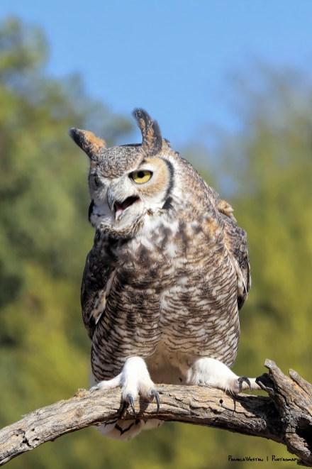 quite the squawk:)