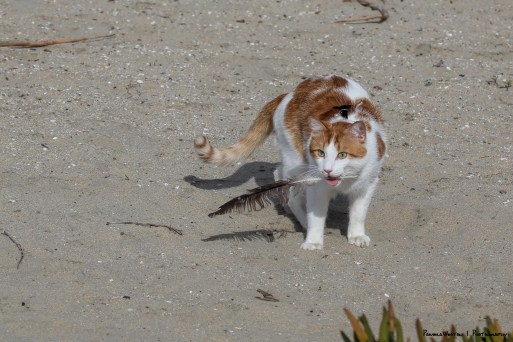 Feathers and sand...yuck!
