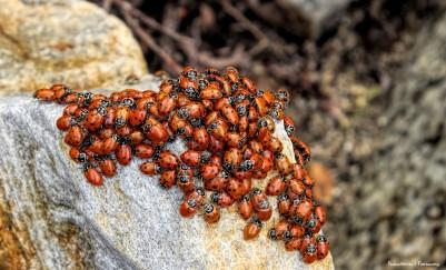 Lady bug orgy!