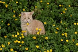 Gamora in the wildflowers