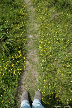 Path of wildflowers