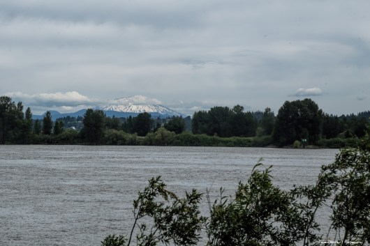 Mt. Saint Helens from Sauvie Island