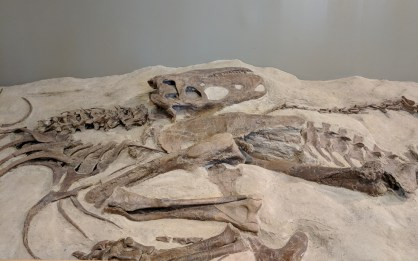 Casts of fossils