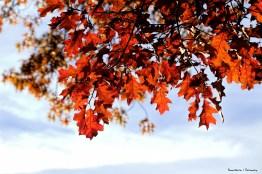Those leaves!