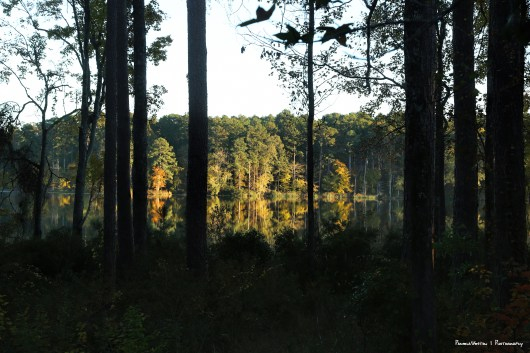 Sunset on Caney Lake in the Kisatchie National Forest