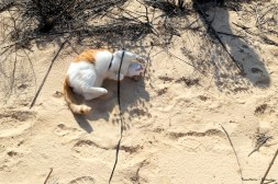 rolling in the sand!