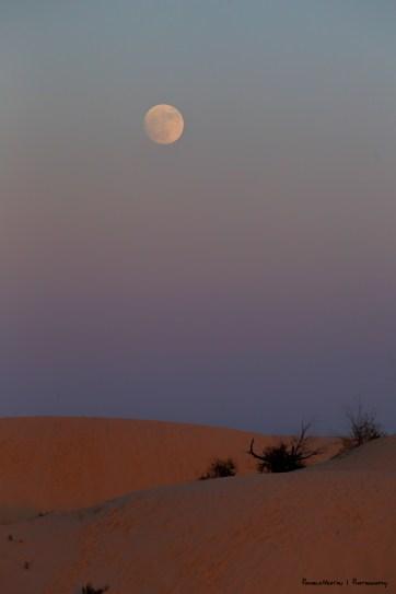 Full Moon of November