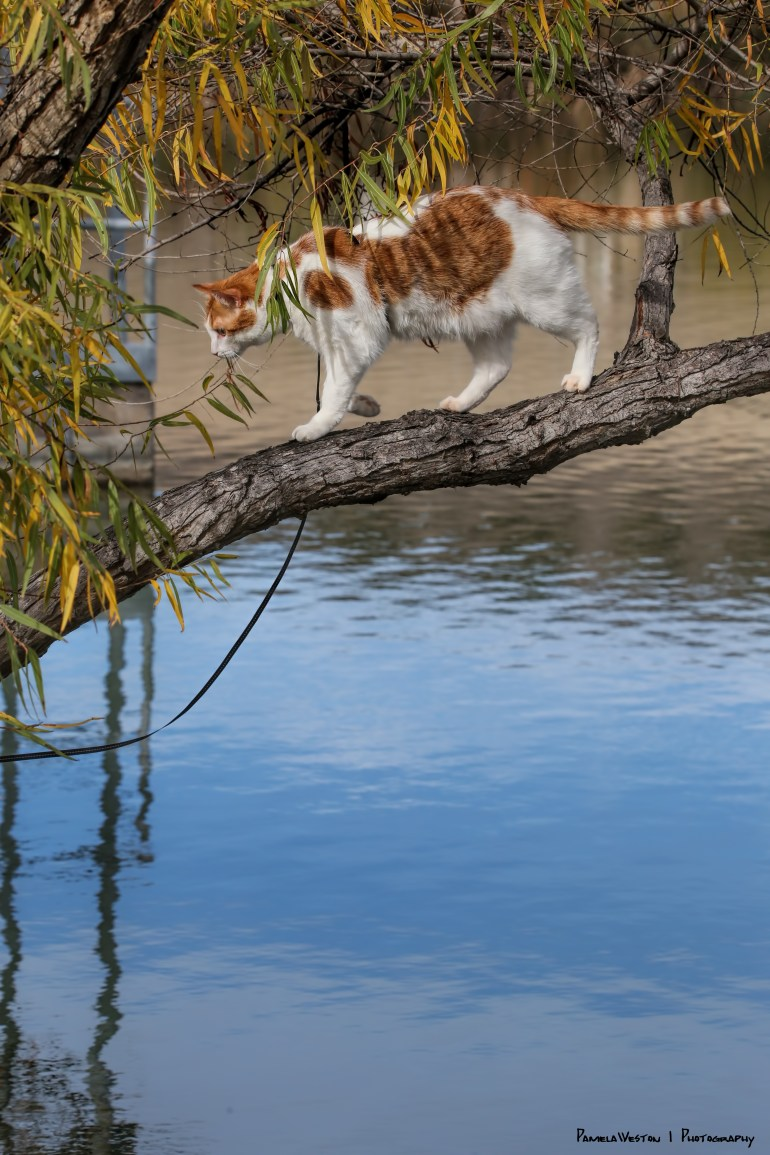 Groot stalking Coots from the tree branch, just one mistep and...