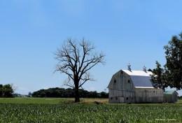 Beautiful old barns