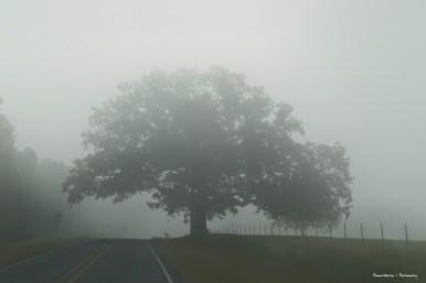 Morning Fog headed towards the US 30