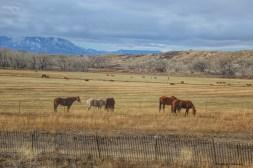 Dry winter fields