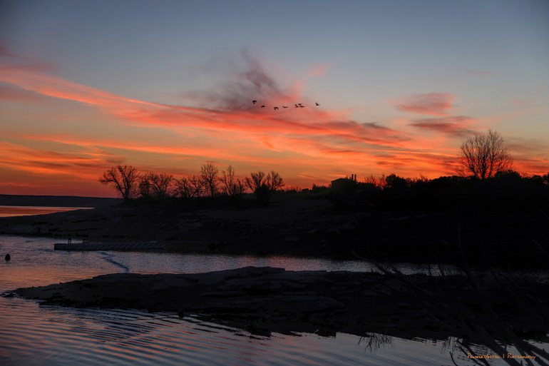 Duck flyby at sunrise