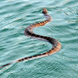 att drömma om ormar