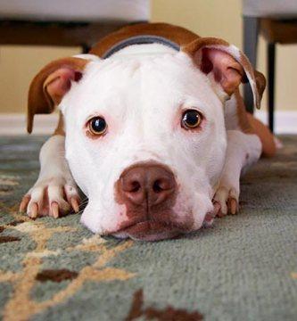 Características de tu perro según su signo