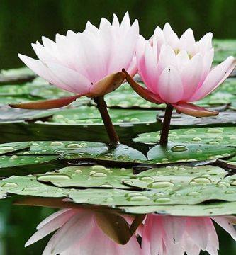 ¿Cuál es la flor ideal para cada signo?