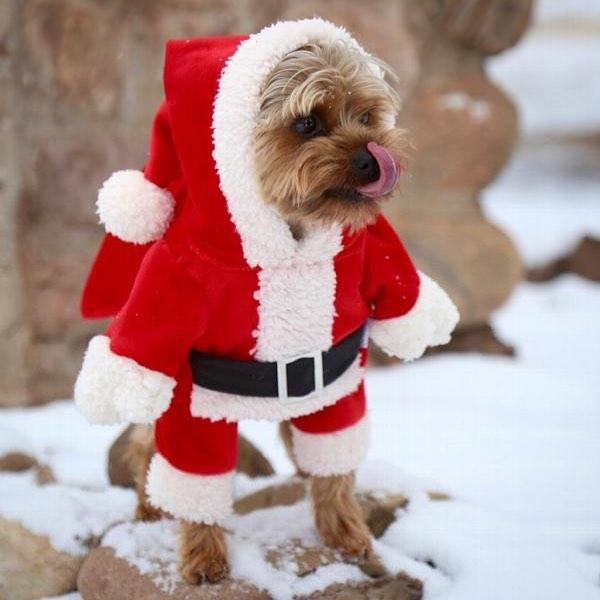 ძაღლის წელი